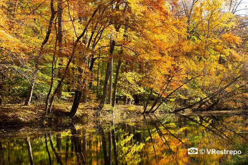 VRestreoi_yellow_trees_11.jpg