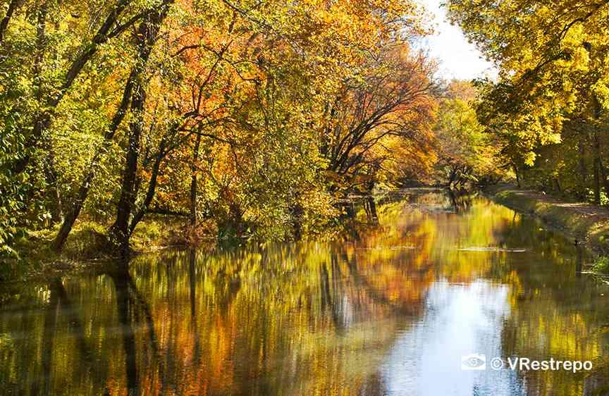 VRestreoi_yellow_trees_12.jpg