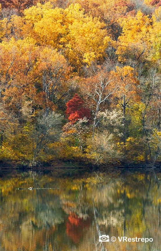 VRestreoi_yellow_trees_22.jpg
