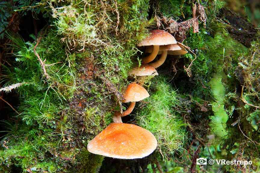 VRestrepo_rainforest_02.jpg