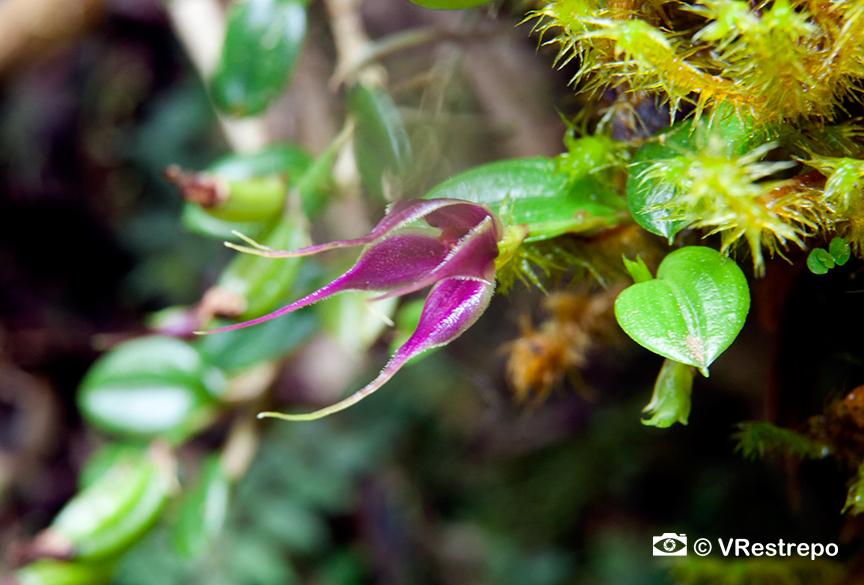 VRestrepo_rainforest_04.jpg