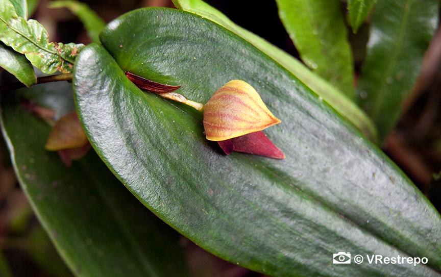 VRestrepo_rainforest_05.jpg