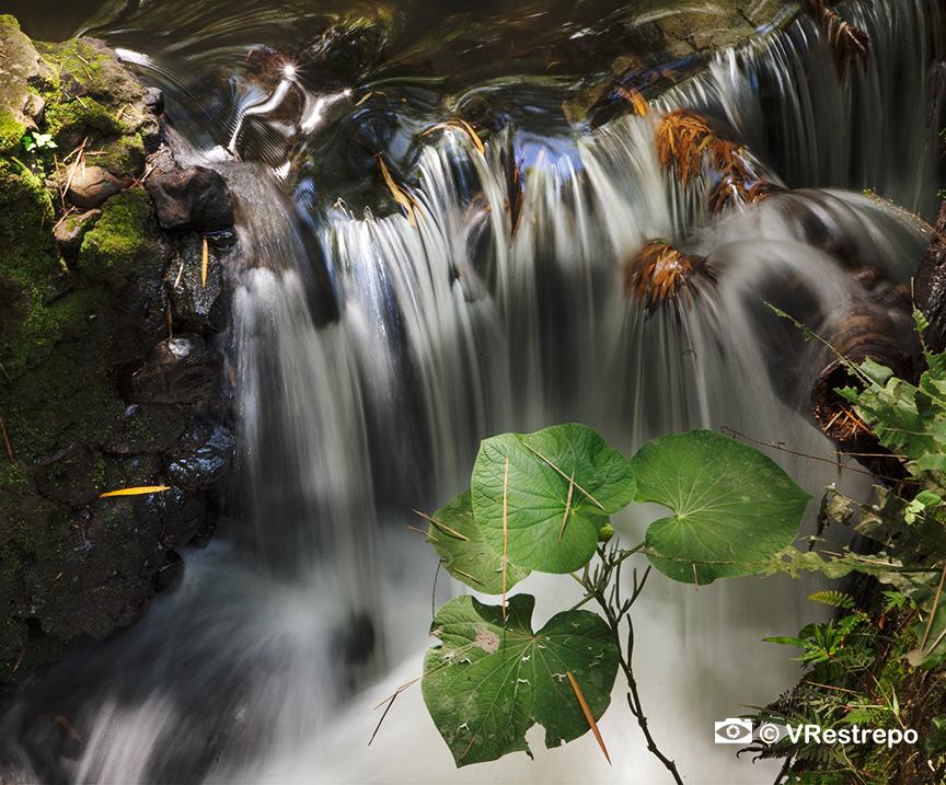 VRestrepo_rainforest_09.jpg